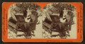 The hunter's prize - New Brunswick moose, from Robert N. Dennis collection of stereoscopic views.png