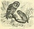 The royal natural history (1893) (14761817486).jpg