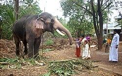 Thechikottukavu Ramachandran.JPG