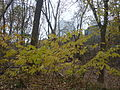 Theodore Roosevelt Island trails (4).JPG