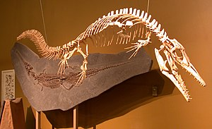 Halisaurus - Mounted skeleton in Thermopolis, Wyoming.