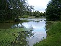 Thorney Lakes - geograph.org.uk - 478842.jpg