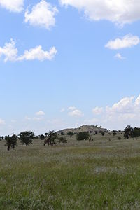 Three Giraffa camelopardalis tippelskirchi individuals north of Lion Rock within the LUMO Community Wildlife Sanctuary in Kenya 2.jpg