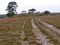 Track on Hale Purlieu, New Forest - geograph.org.uk - 277040.jpg