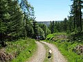 Track through Baluain Wood - geograph.org.uk - 1328544.jpg