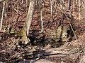 Trail 2 PB250227.jpg