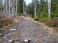 Trail near Rotenbeek 06.jpg