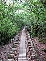 Trail to Jomon Sugi.jpg