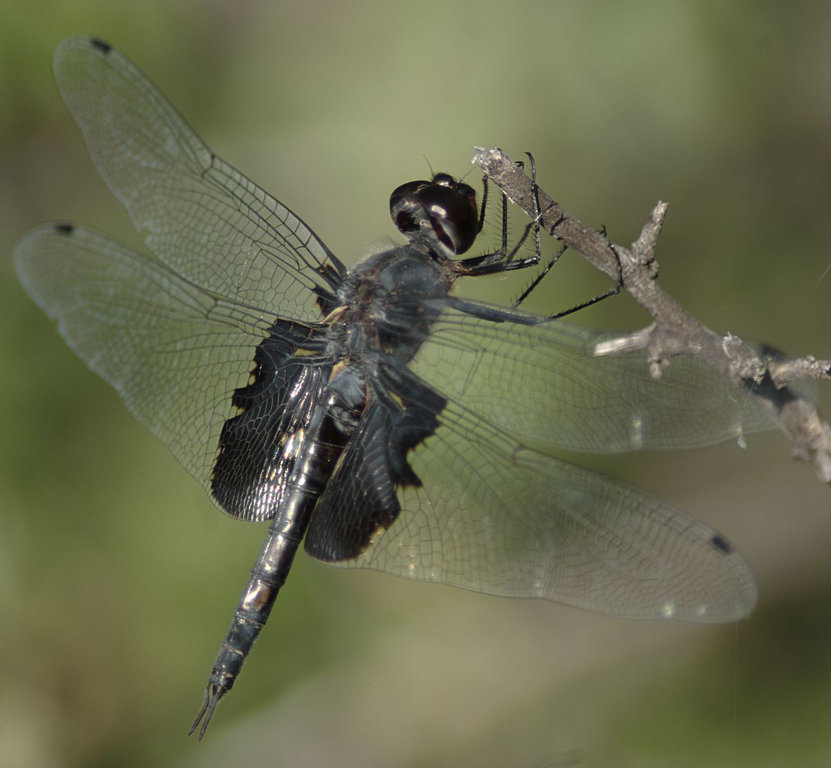 Image Result For Fly Wearing A