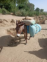 Transport animal.jpg