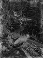 Transporting kauri logs (AM 88381-1).jpg
