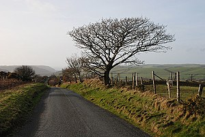 English: Tree by the road No guessing as to wh...