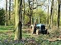 Tree felling, Cobham Frith (1) - geograph.org.uk - 1265325.jpg