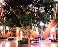 Trees (3120391105).jpg