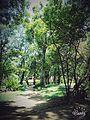Trees dance.jpg