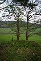 Trees on Milltown Hill - geograph.org.uk - 1255304.jpg