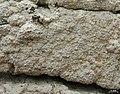 Tremella diploschistina Millanes, M. Westb., Wedin & Diederich 590905 2013-04-19.jpg