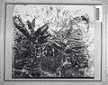Tropenmuseum Royal Tropical Institute Objectnumber 60001019 Jonge cacao,bananen, casave en schadu.jpg
