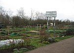 File:Trumpington allotments - geograph.org.uk - 706670.jpg