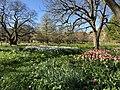 Tulipe garden.jpg