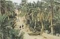 Tunis1960-026 hg.jpg