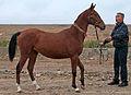 Turkmen Studfarm - Flickr - Kerri-Jo.jpg