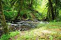 Turner Creek at Menefee County Park - Yamhill County, Oregon.JPG
