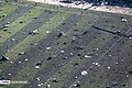 Ukraine Air Boeing 737 Crashes in Southern Tehran 2020-01-08 30.jpg