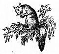 Unknown- squirrel.jpg