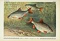 Unsere Süßwasserfische (Tafel 47) (6102606231).jpg