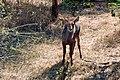 Victoria Falls 2012 05 24 1677 (7421906832).jpg