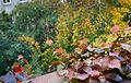 Vienna - Hundertwasser housing complex - 0372.jpg