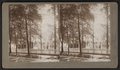 View of trees and house, by DeMott, S., fl. 1880-1899.png