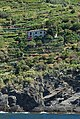 Vignoble en terrasses de Monterosso al Mare.jpg