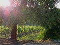 Vineyardsmall.jpg