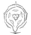 Viola flowerdiagram.png