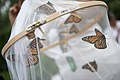 Volunteers with Monarch Teacher Network release butterflies in Arlington National Cemetery (28796536901).jpg