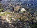 Vylet k Cernemu jezeru Sumava - 9.srpna 2010 231.JPG