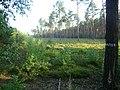 WILCZE ŁUGI lato 47 - panoramio.jpg