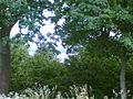 W oddali Jez.Tonka -widok od strony wsi Białej Woli - panoramio.jpg