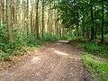 Waldweg bei Holm - geo.hlipp.de - 23965.jpg