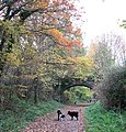 Walking the dogs - geograph.org.uk - 1042906.jpg