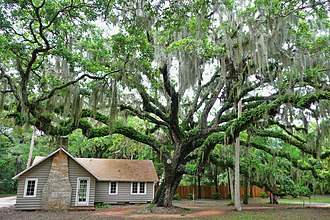 Washington Oaks Gardens State Park - Visitor center alongside live oak tree