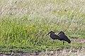 Western Serengeti 2012 06 02 4120 (7557738954) (2).jpg