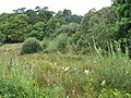 Wetland, Gartcharran - geograph.org.uk - 529832.jpg