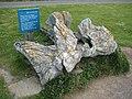 Whale bone, Croyde Bay - geograph.org.uk - 1366699.jpg