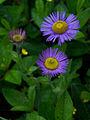 Whf purple 05.jpg