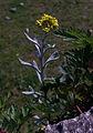 Whf yellow 21.jpg