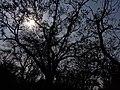 Winter sunlight bandipur national park, india.jpg