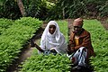 Women with seedlings for reforestation in Tanzania (5984894513).jpg
